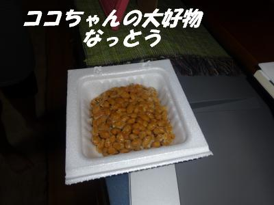 Natto1_2